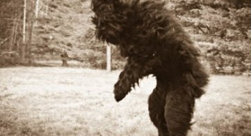 Types of Bigfoot and Its Derivatives