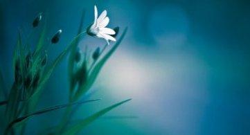 The Heart of 'White Magic'