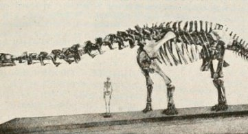 The Reason Why 'Homo Erectus' Cohabited with 'Dinosaurs'